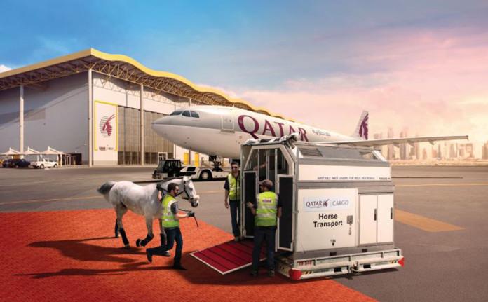 Qatar Airways Kargo Atları Transfer Edecek