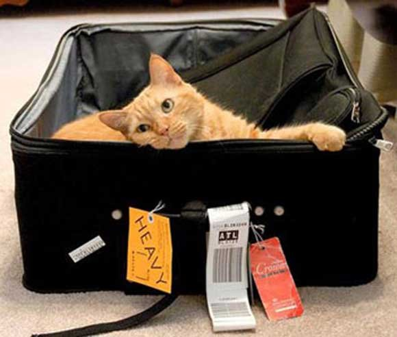 Kediyle uçak seyahati